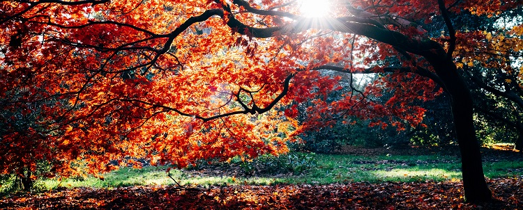 Wymarzona jesień dla frankowiczów